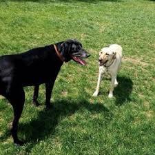Canine Creature Comforts Creature Comforts Pet Retreat 31 Photos Pet Sitting 808 S