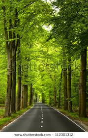 beautiful trees stock images royalty free images vectors