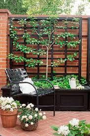 What Is A Backyard Garden Best 25 Plant Trellis Ideas On Pinterest Backyard Plants Diy