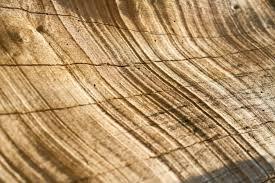 tree texture and background photo premium