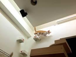 enudden cat steps on wall ikea hackers ikea hackers