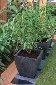 Urban Herb Garden Ideas - 69 best container gardening images on pinterest container