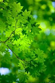 3067742 fresh and background with green trees jpg 533