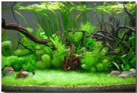 Aquascape Fish Betta Aquarium Ideas Ideas About Betta Fish Tank On Pinterest