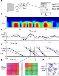 emergence of complex wave patterns in primate cerebral cortex