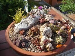 Mini Rock Garden Garden At Desert Landscapes Mini