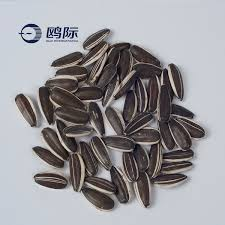 turkish pink sunflower seeds for human consumption buy sunflower