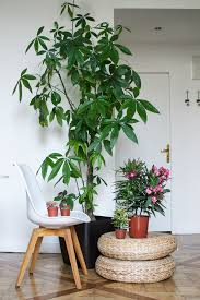 apartment plants urban jungle bloggers my plant gang airbnb apartment in