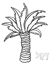 coloring pictures of a palm tree torah tots alef bet palmtree coloring page
