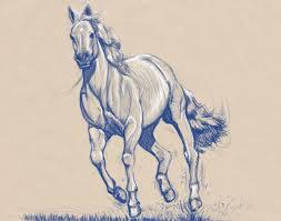 9 horse sketches free u0026 premium templates