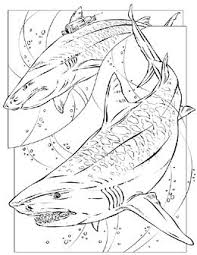 sharks coloring pages 87 best shark coloring pages images on pinterest coloring sheets