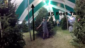 15 foot tree vlog 5 cobyd
