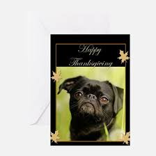 pug thanksgiving greeting cards thank you cards and custom cards