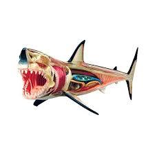 49 best sharks sharks and mores sharks images on pinterest