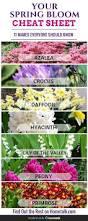 name of spring flowers images flower decoration design
