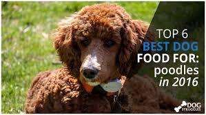 top 6 best dog foods for poodles in 2017 dogstruggles
