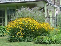 my favorite perennials for the philadelphia area newtown square