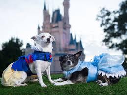 Dog Halloween Costume Ideas Disney Dog Halloween Costume Ideas Perfect Pet Disney