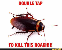 Flying Cockroach Meme - giant flying cockroach my background blog wallaby background mtm