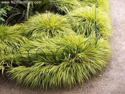garden design garden design with pictures of ornamental grasses
