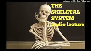 Anatomy And Physiology Skeletal System Test The Skeletal System Audio Lecture Youtube
