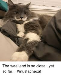 So Close Meme - the weekend is so closeyet so far mustachecat meme on me me