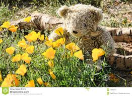 teddy bear flowers stock photos images u0026 pictures 1 299 images
