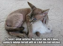Easter Funny Memes - lolcats easter lol at funny cat memes funny cat pictures with