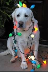 cute christmas picture animal i should do this with my puppy
