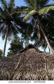 primitive traditional sri lankan house middle stock photo 555101836