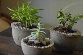 concrete planters diy mini concrete succulent planters east pearl street