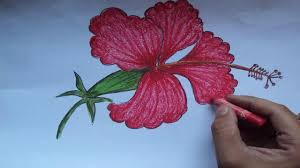 which state has a hibiscus how to draw a beautiful hibiscus flower step by step youtube