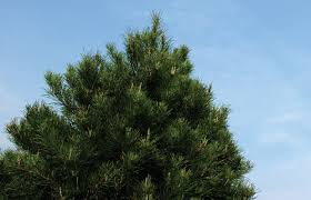 memories trim the tree