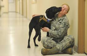 morale dog eases stress for upper cape military unit news