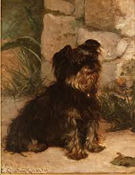 affenpinscher brown yorkshire terrier wikiwand