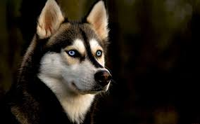 dog wallpapers dog wallpapers dog full hq definition quality wallpapers archive yw