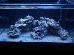 Aquascaping Rocks Help With Aquascape With Strange Shaped Rocks Reef2reef