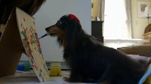 Pictures Of Blind Dogs Blind Dog Learns To Paint Youtube