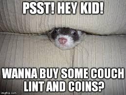 Ferret Meme - image result for ferret meme animal crossing pinterest ferret