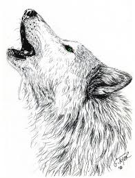 wolf howling pencil and in color wolf howling
