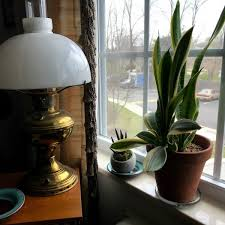 indoor trees that don t need light simple and serene living houseplants and low light