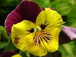 significado de imagenes sensoriales wikipedia las imagenes sensorilaes las imágenes sensoriales