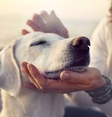 dog cremation pet cremation midwest cremation service