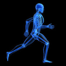 Anatomy And Physiology Introduction To The Human Body Online Anatomy Courses Learn Human Anatomy U0026 Physiology Alison