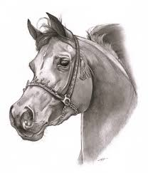 pencil drawings of horse heads