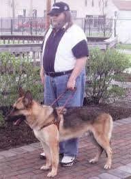 belgian sheepdog idaho david zelenak obituary parma ohio legacy com