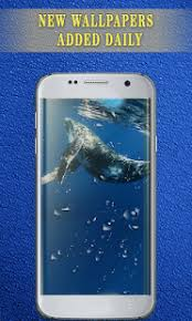 blue whale wallpaper home u0026 lockscreen live whale android apps