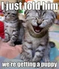 Monday Cat Meme - dog meme monday bullwrinkles dog blog dog cat humor dog cat