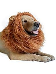 Halloween Costumes For Dogs Amazon Com Costumes Apparel U0026 Accessories Pet Supplies