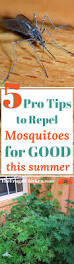 5 pro tips to repel mosquitos for good this summer them the